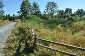 magnuson_wetland_area